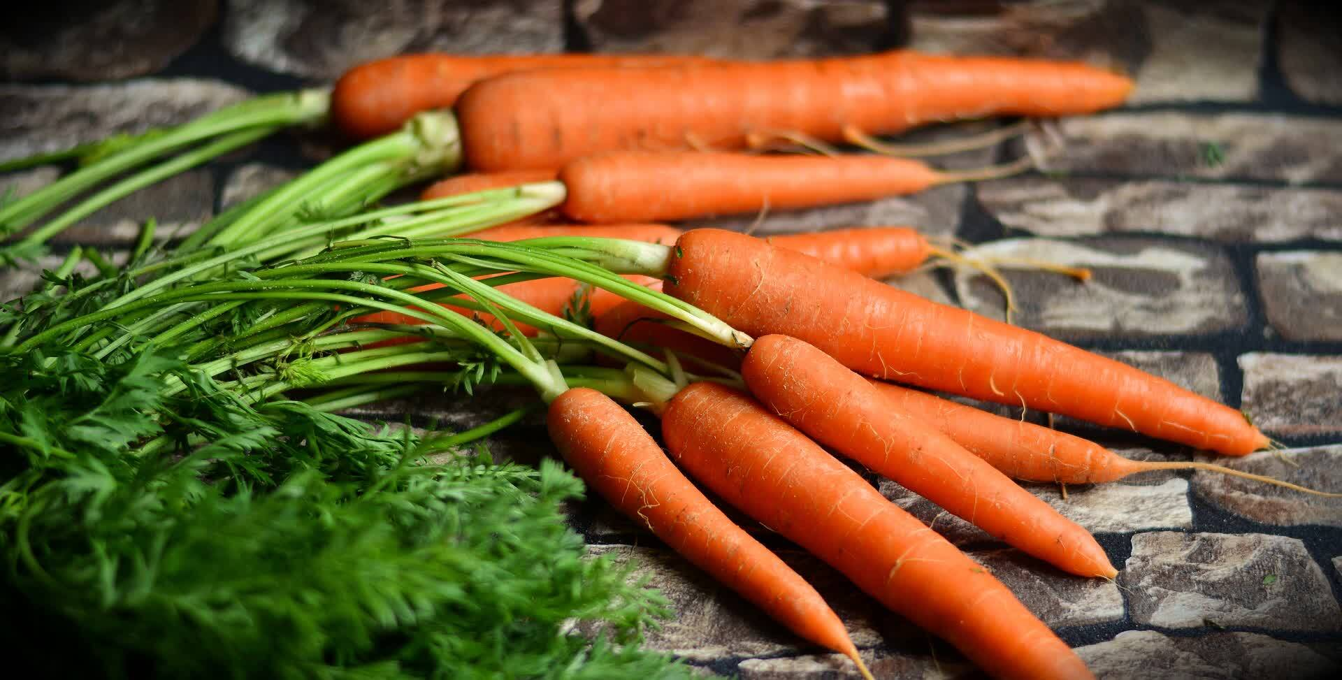 морковь самый полезный корнеплод